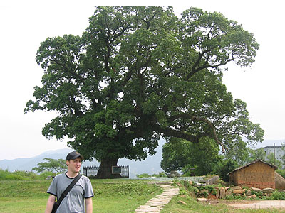 ORION STANDS IN FRONT OF A 2000 YEAR OLD CAMPHOR TREE.
